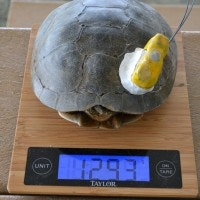 turtle project weight