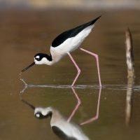 May contain: bird, stork, animal, crane bird, and waterfowl