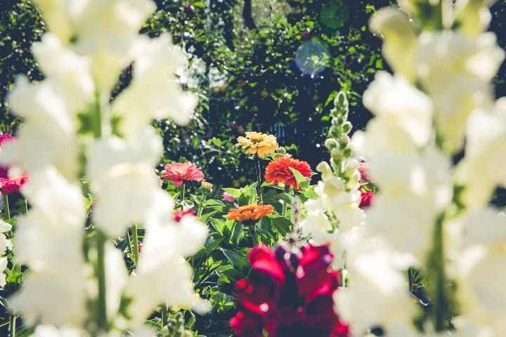 May contain: blossom, flower, plant, geranium, and petal