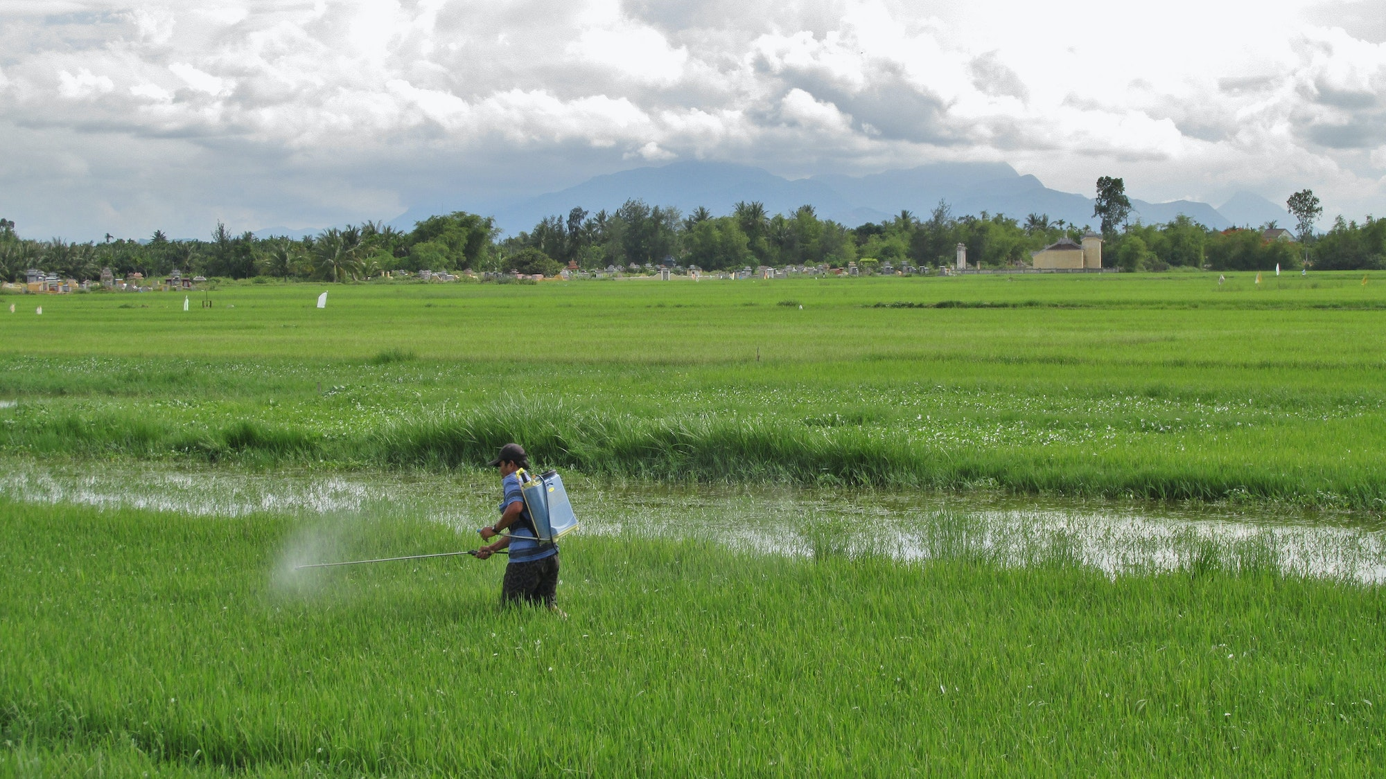 May contain: field, outdoors, grassland, nature, paddy field, countryside, human, and person