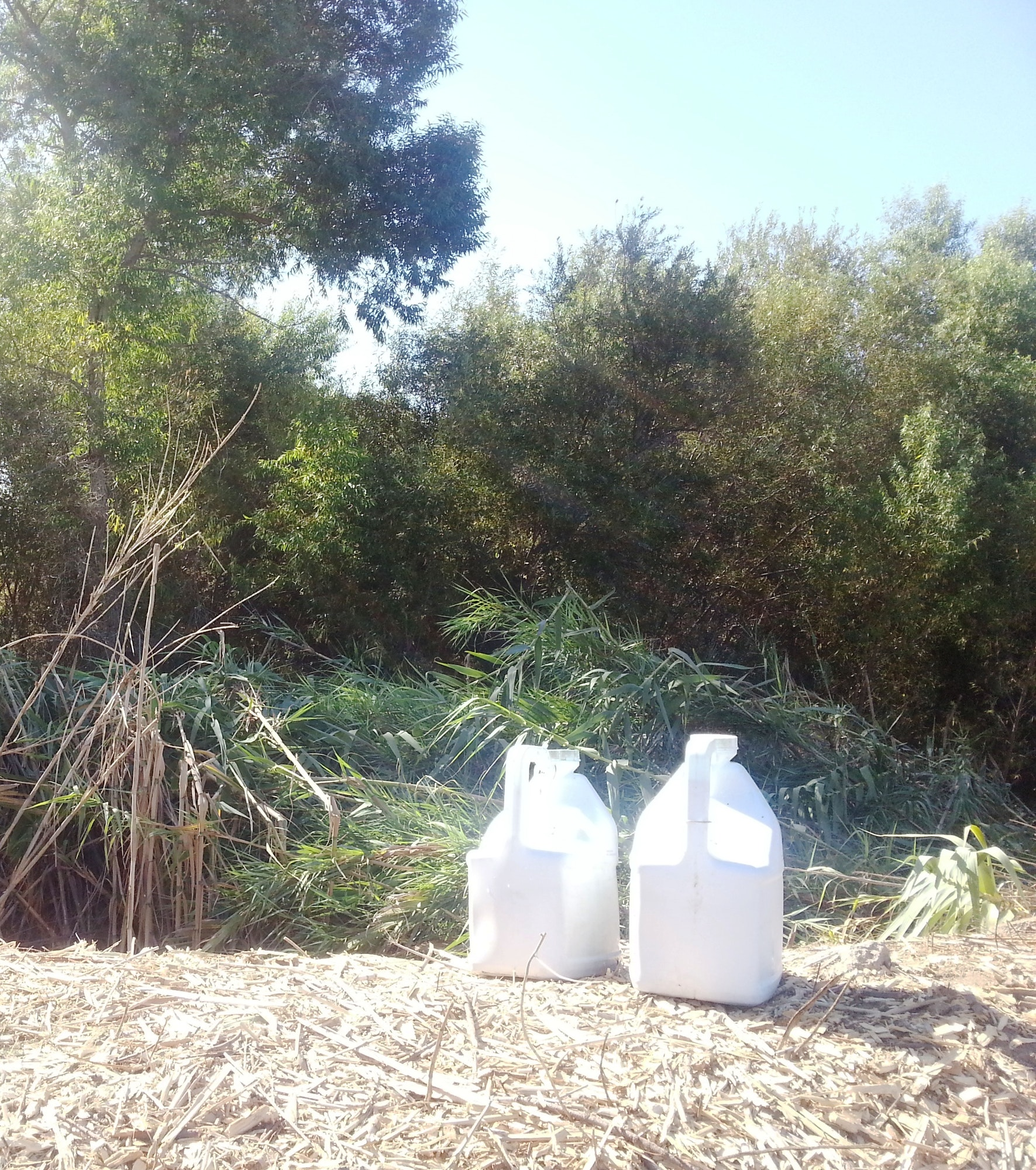 May contain: jug