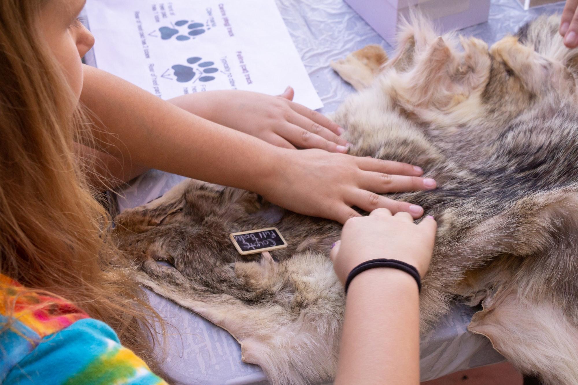 Children petting a coyote pelt