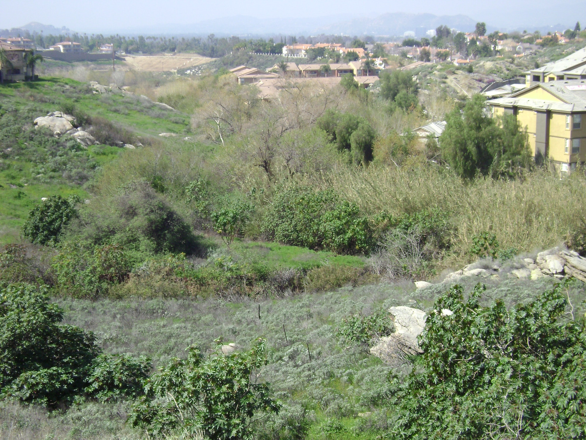 Image of a natural habitat corridor with native landscape in the forefront and homes in the background.
