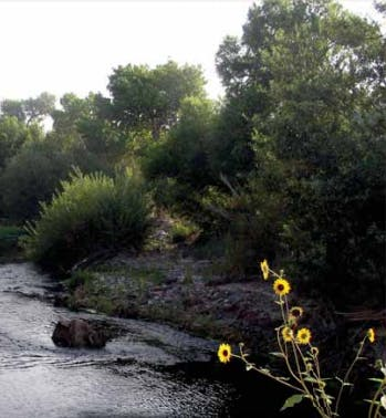 Image of natural environment with stream, and riverbank with trees and sunflowers.