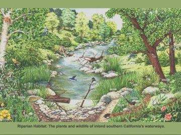 Riparian habitat poster