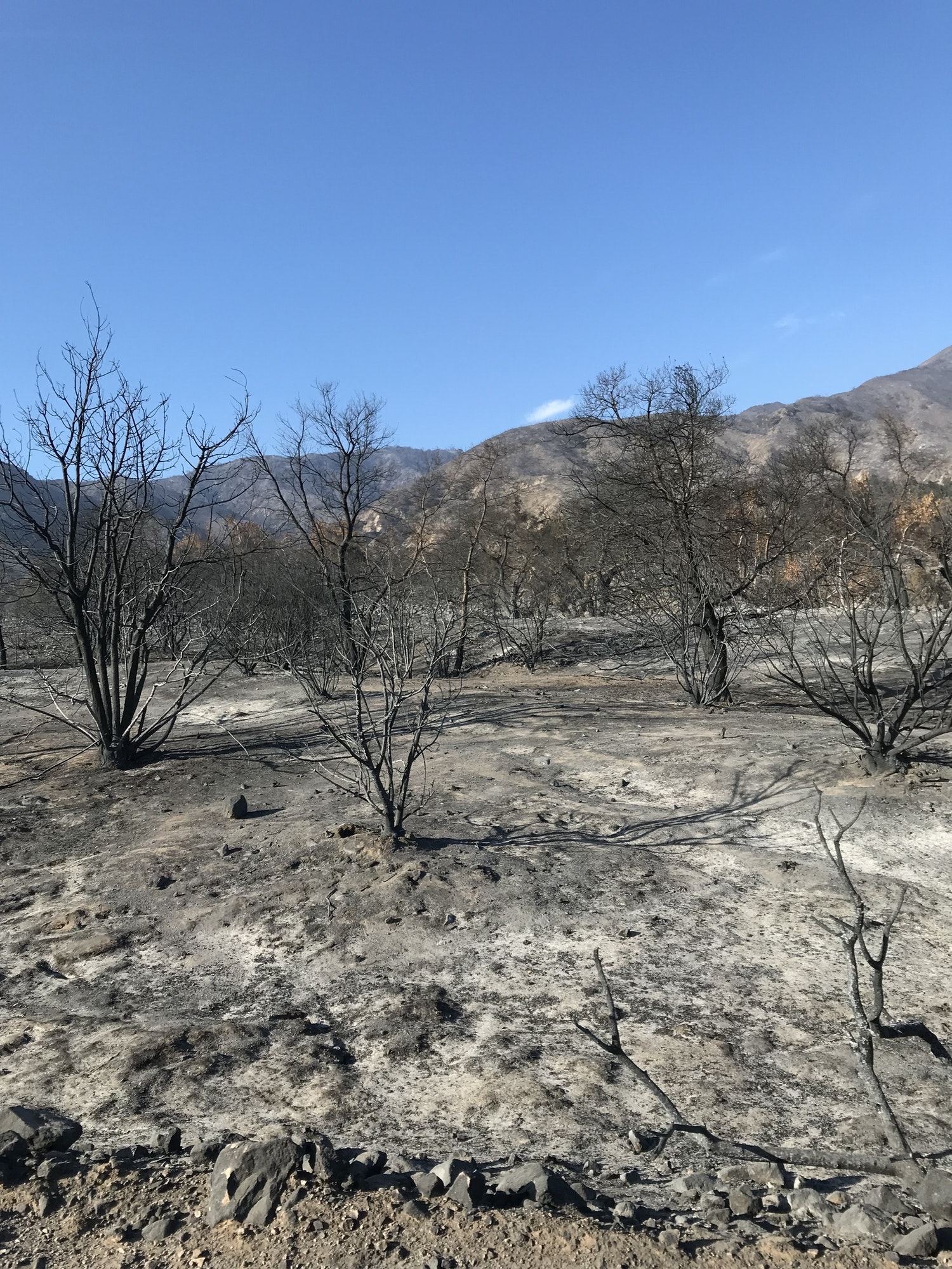 Area burned in the Holy Fire