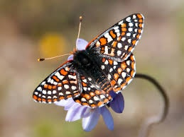 Image of butterfly on flower.