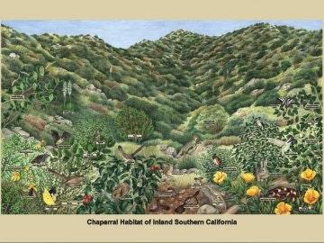 Chaparral habitat poster