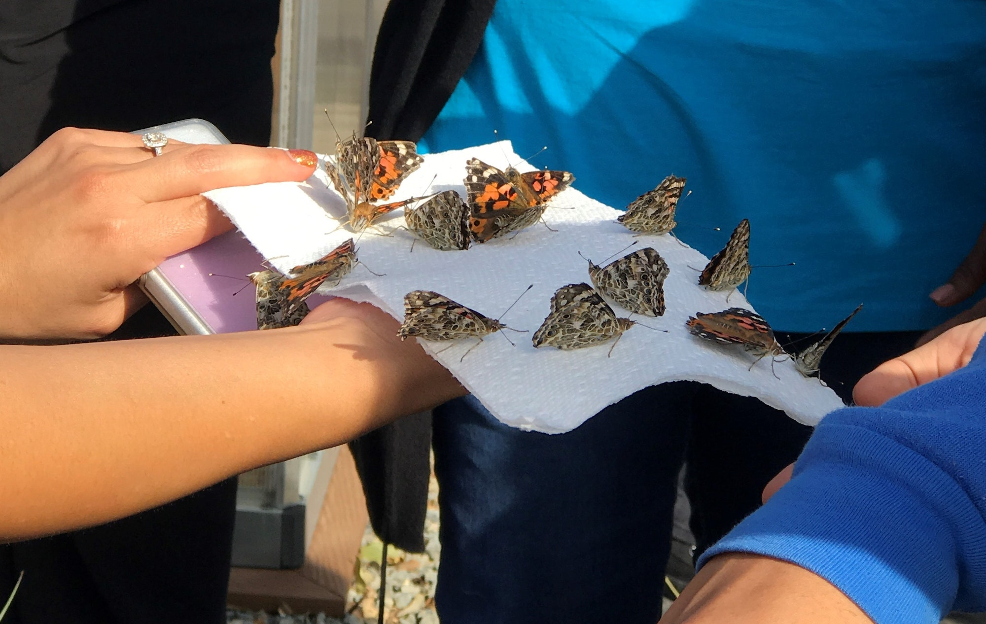 May contain: Students holding butterflies that were raised and now getting released.