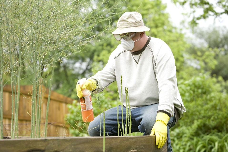Image of a man spraying pesticides in a garden.