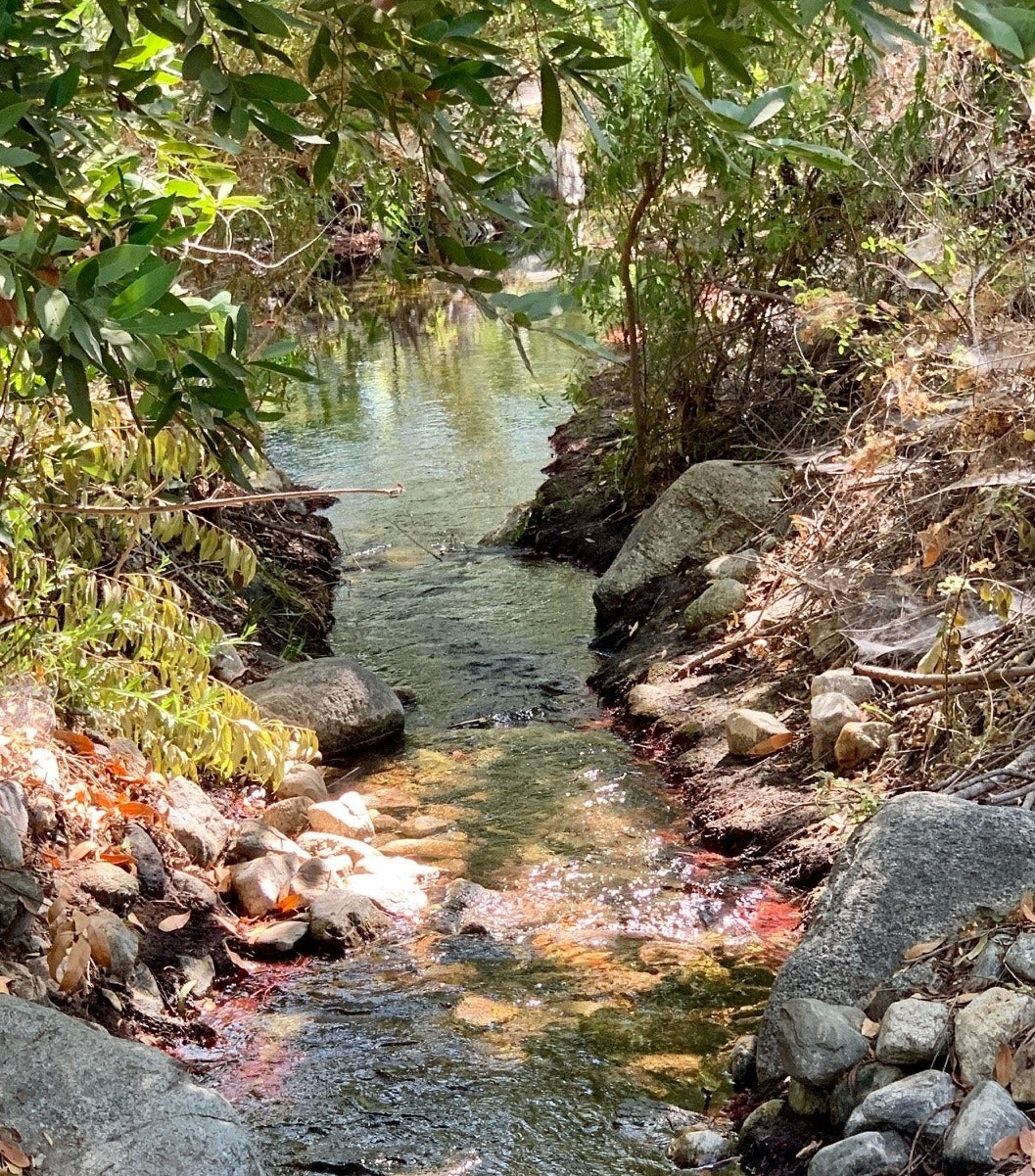 Image of stream at the LandUse Learning Center