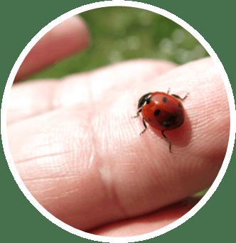 Up-close photo of a ladybug on a finger.