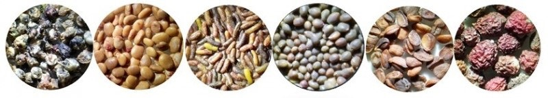 Image collage of different plant seeds.