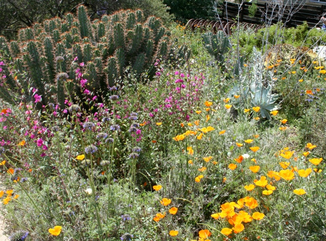 California native plant landscape