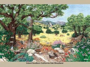 Oak Woodland habitat poster
