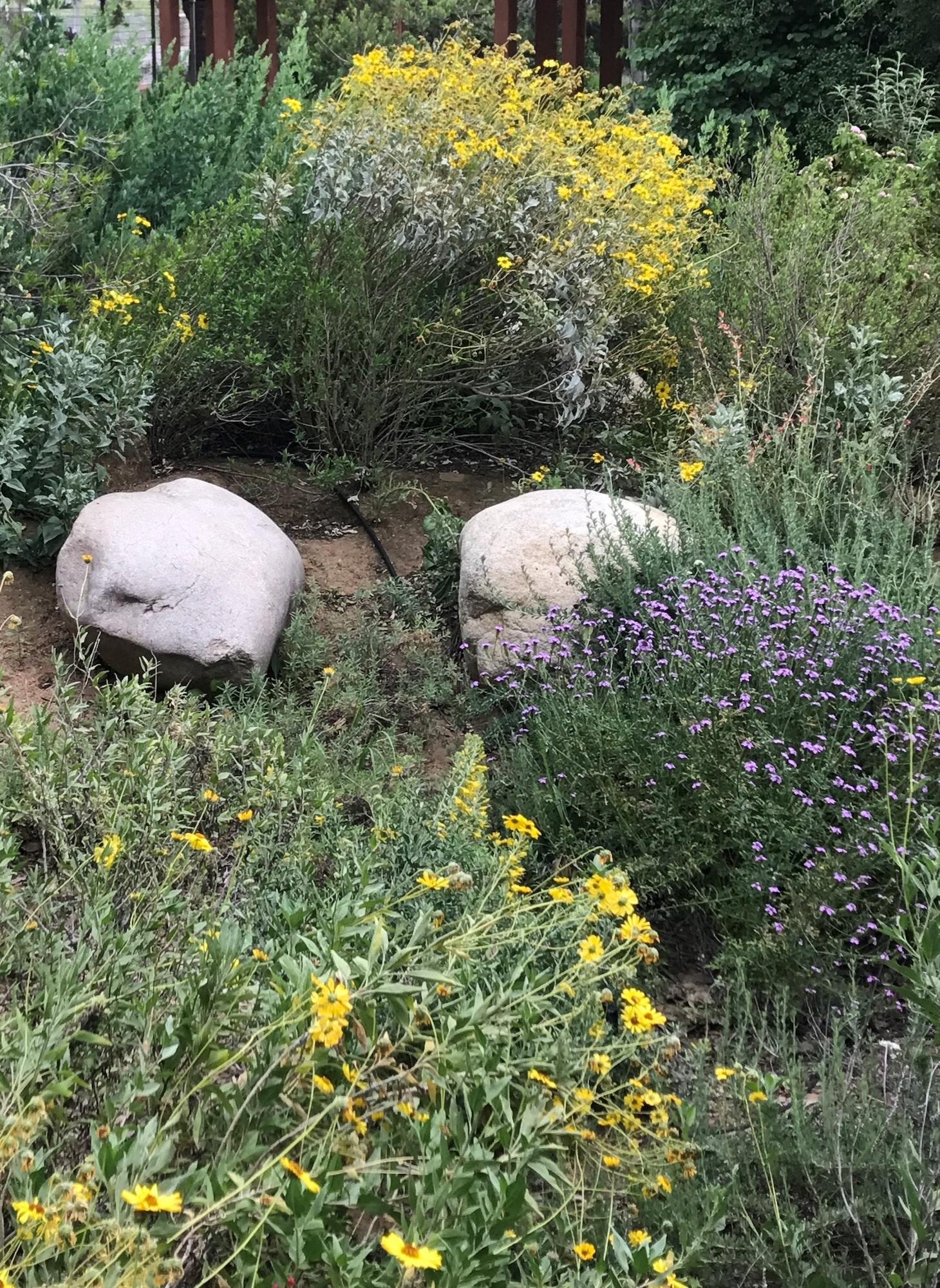 Native plant garden.