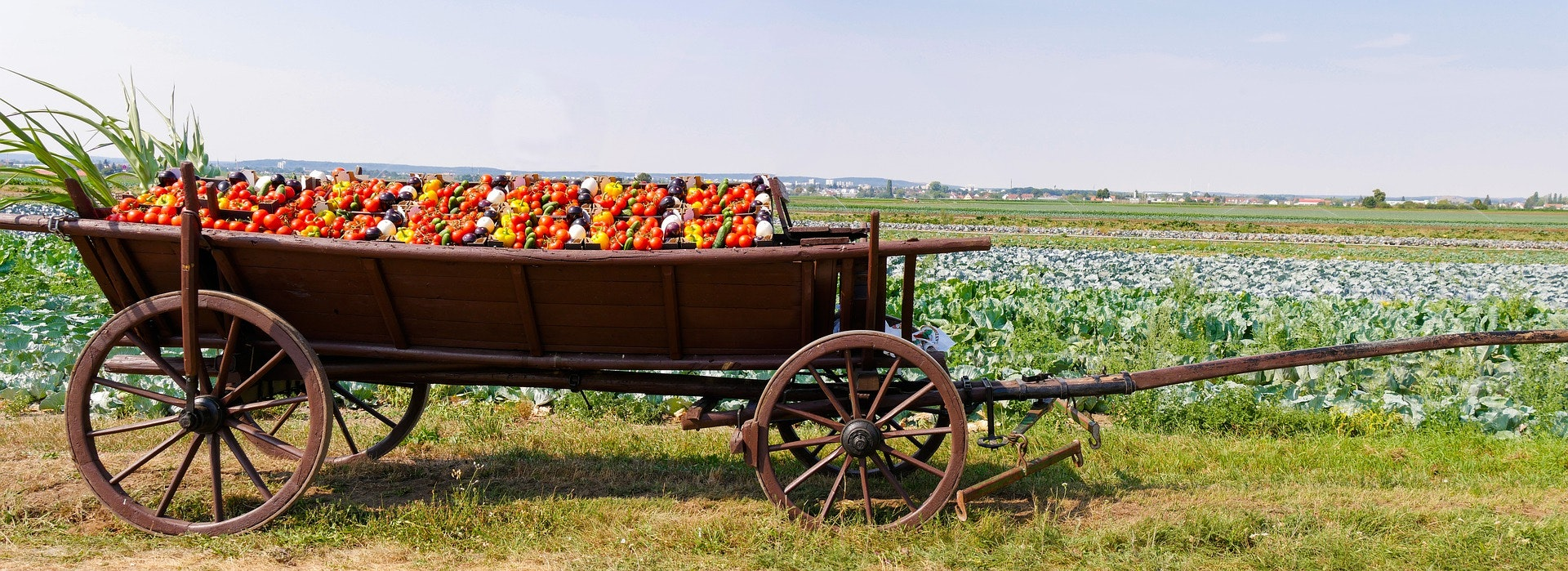 Image of wagon filled with fruits and vegetables.