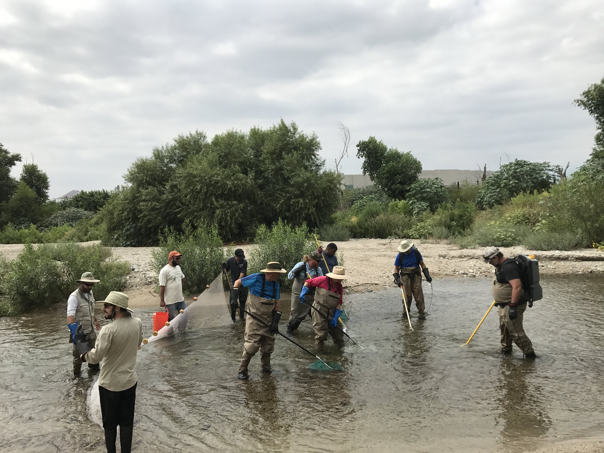RCRCD staff and other field techs working in the river monitoring aquatic species.