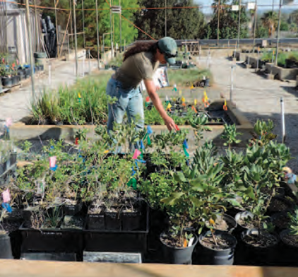 Image of RCRCD staff growing native plants in their nursery.