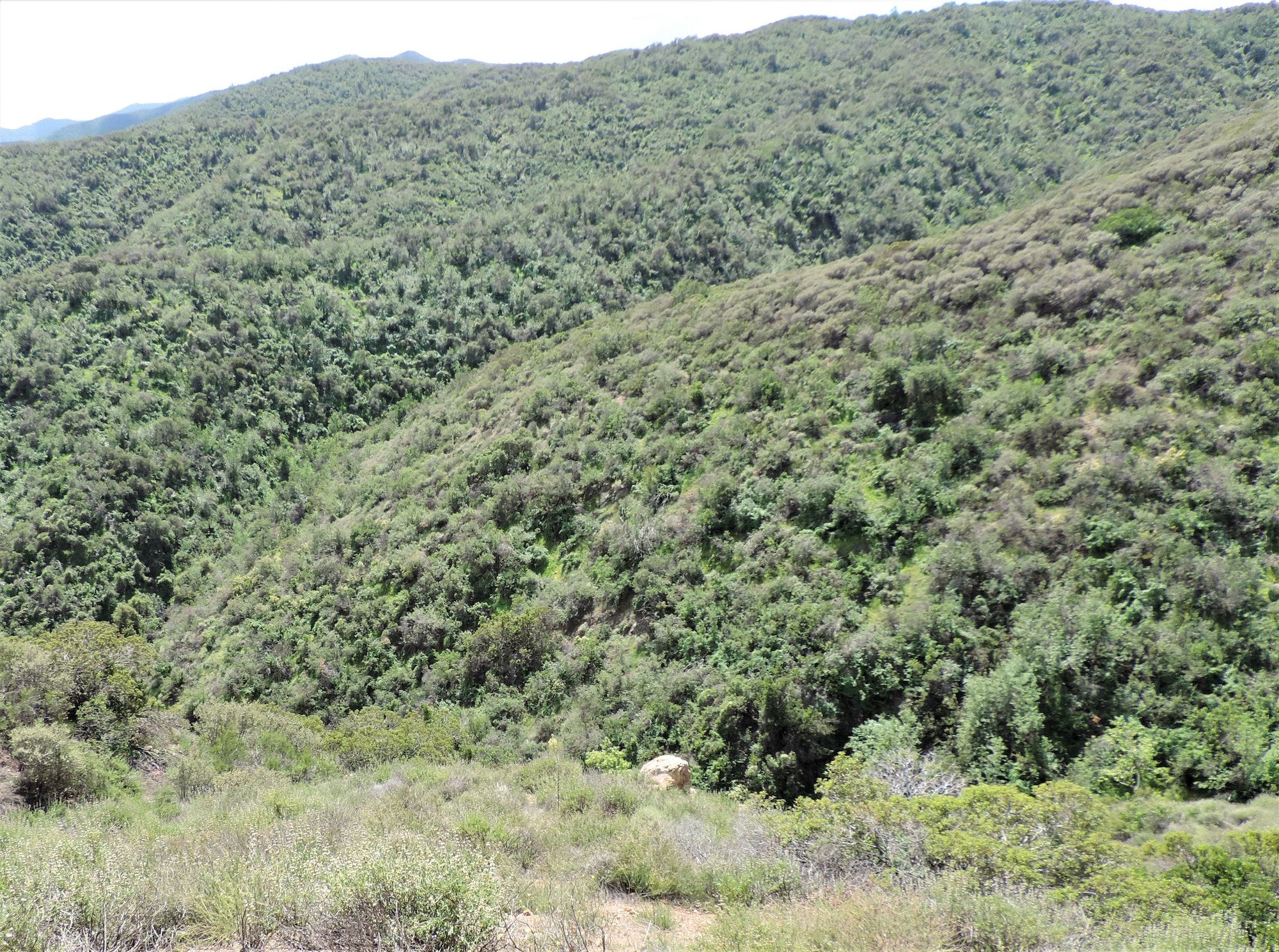 Photo of a hill covered in chaparral habitat