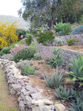 Drought tolerant garden.