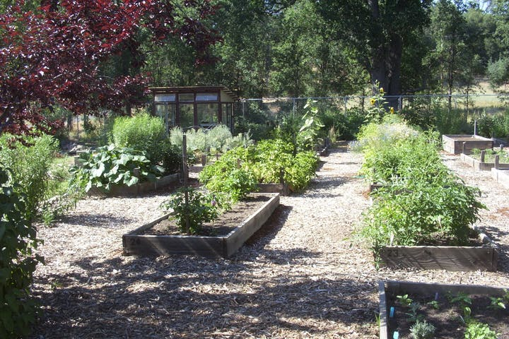 Community garden on Carter street, outdoors, garden, arbour, potted plant, and raised beds