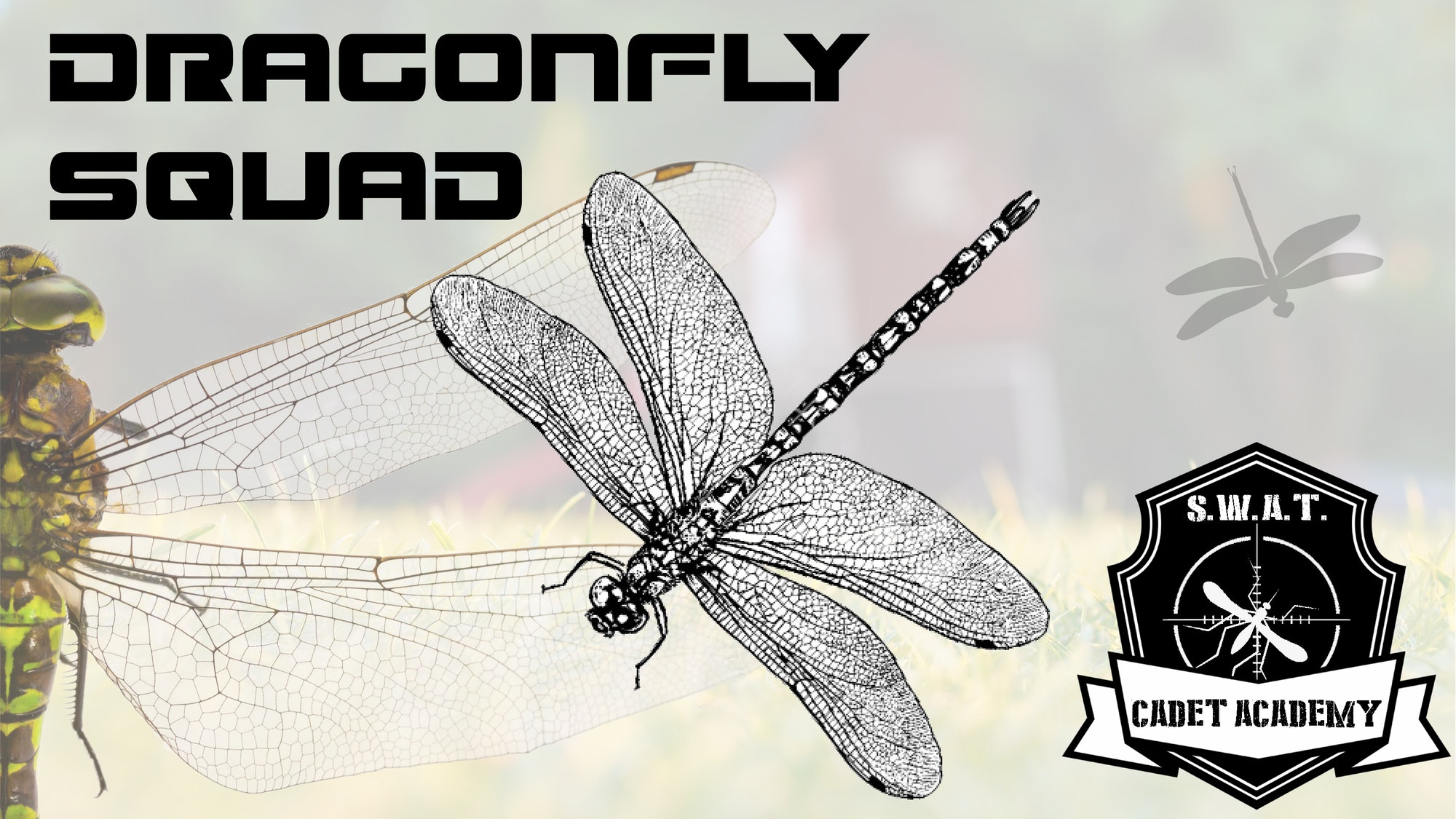 May contain: dragonfly, anisoptera, insect, invertebrate, and animal