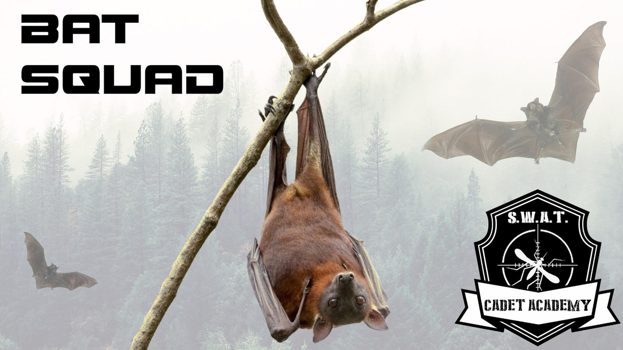 May contain: wildlife, animal, mammal, and bat
