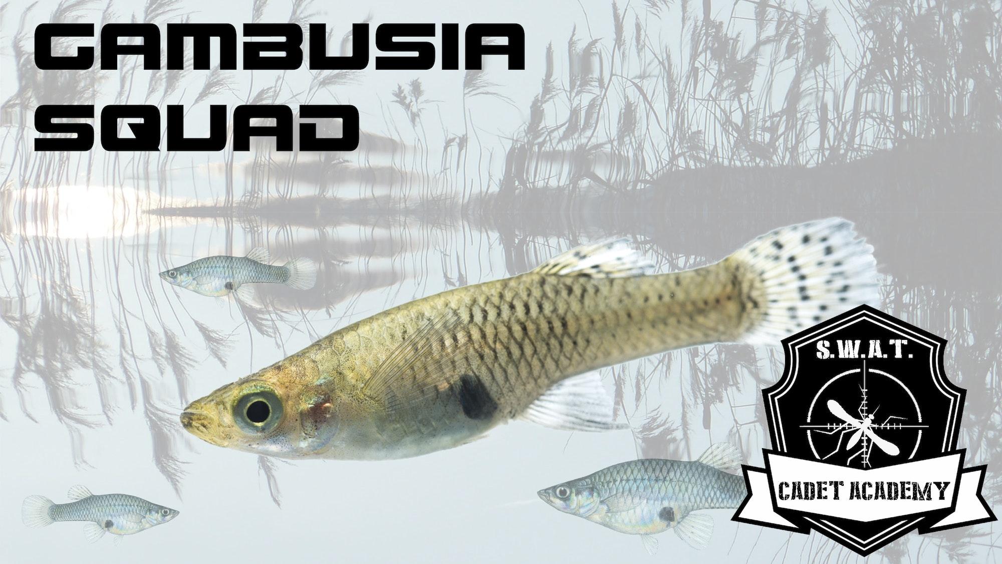 May contain: fish and animal