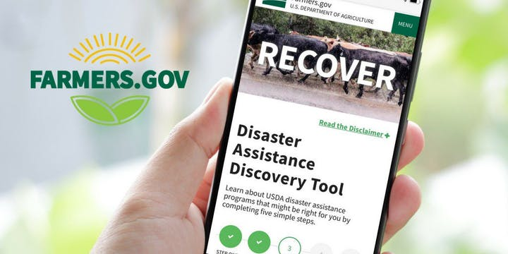 Farmers.gov Disaster Assistance Discovery Tool on cell phone