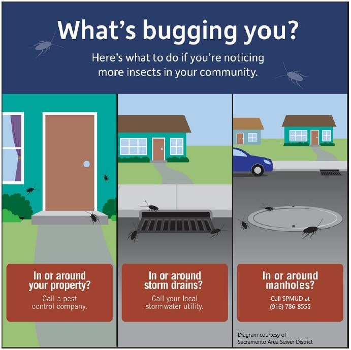 What's Bugging You Image