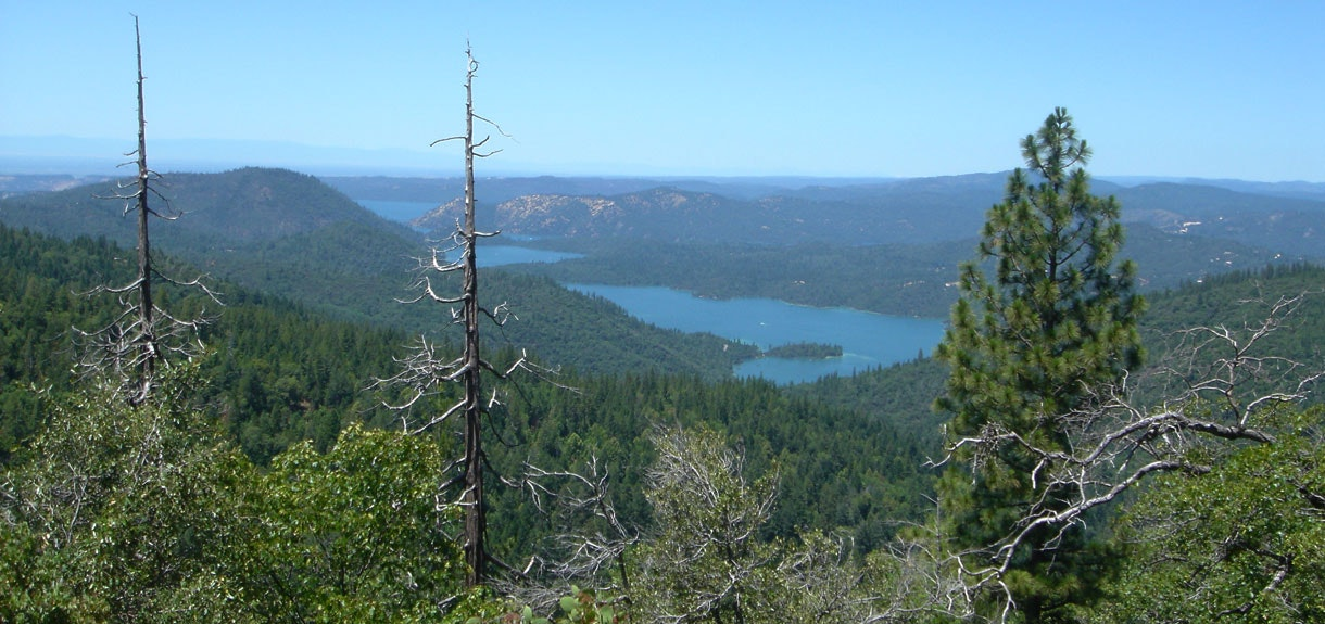 Lake Oroville trees, and plants