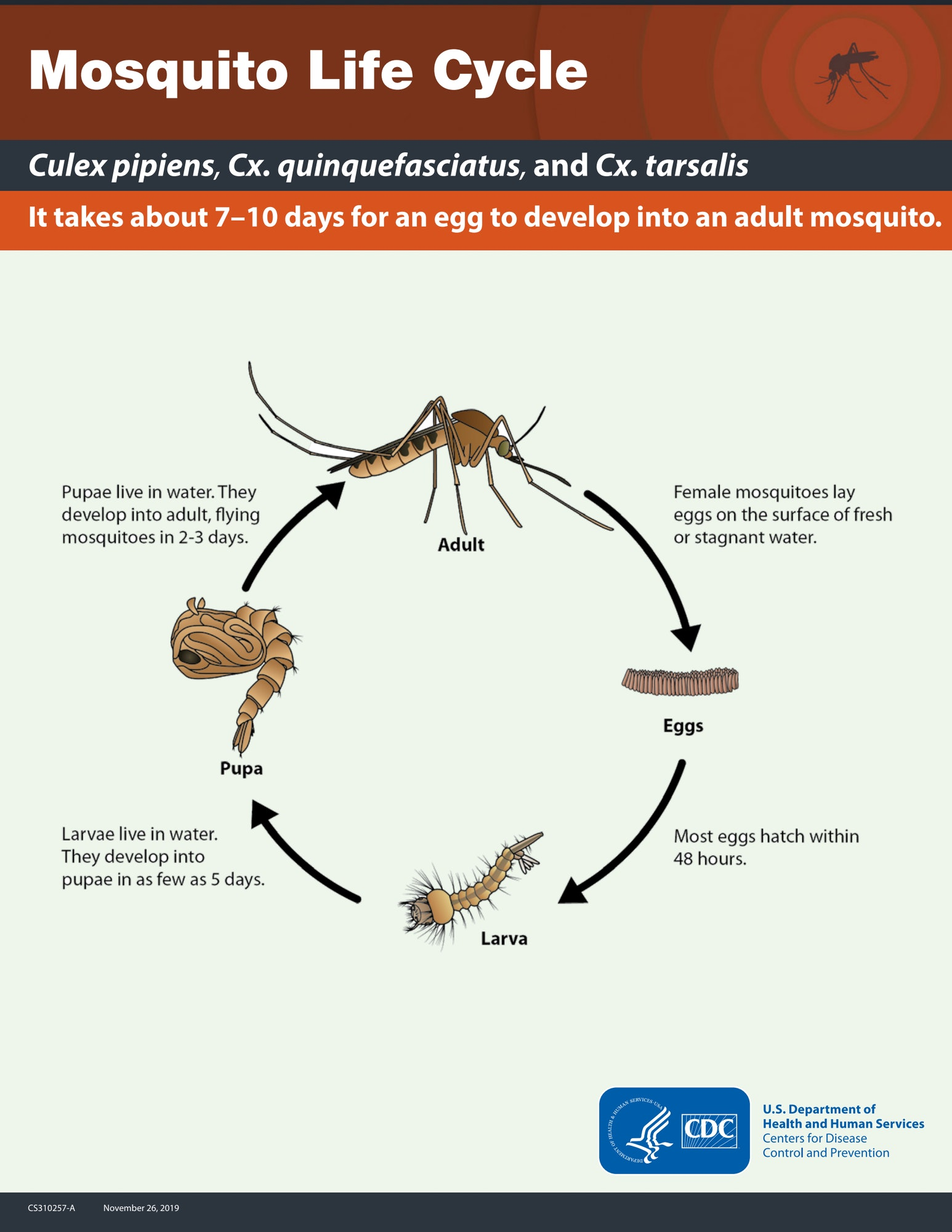 May contain: mosquito, diagram