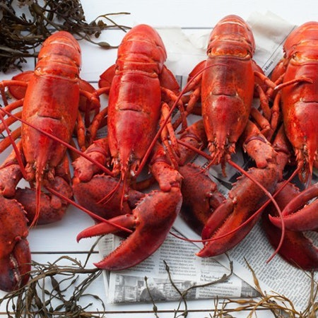 May contain: animal, sea life, seafood, lobster, and food