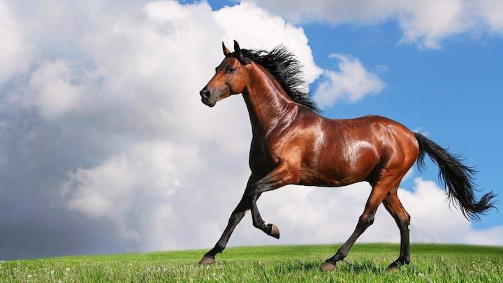 May contain: mammal, animal, and horse