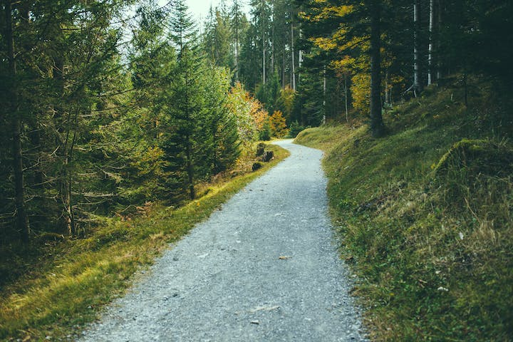 May contain: gravel, dirt road, road, fir, plant, abies, tree, path, tarmac, and asphalt