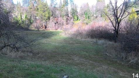 Tauhindauli Park meadow