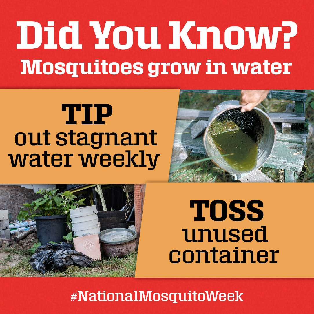tip out stagnant water and toss items that hold water