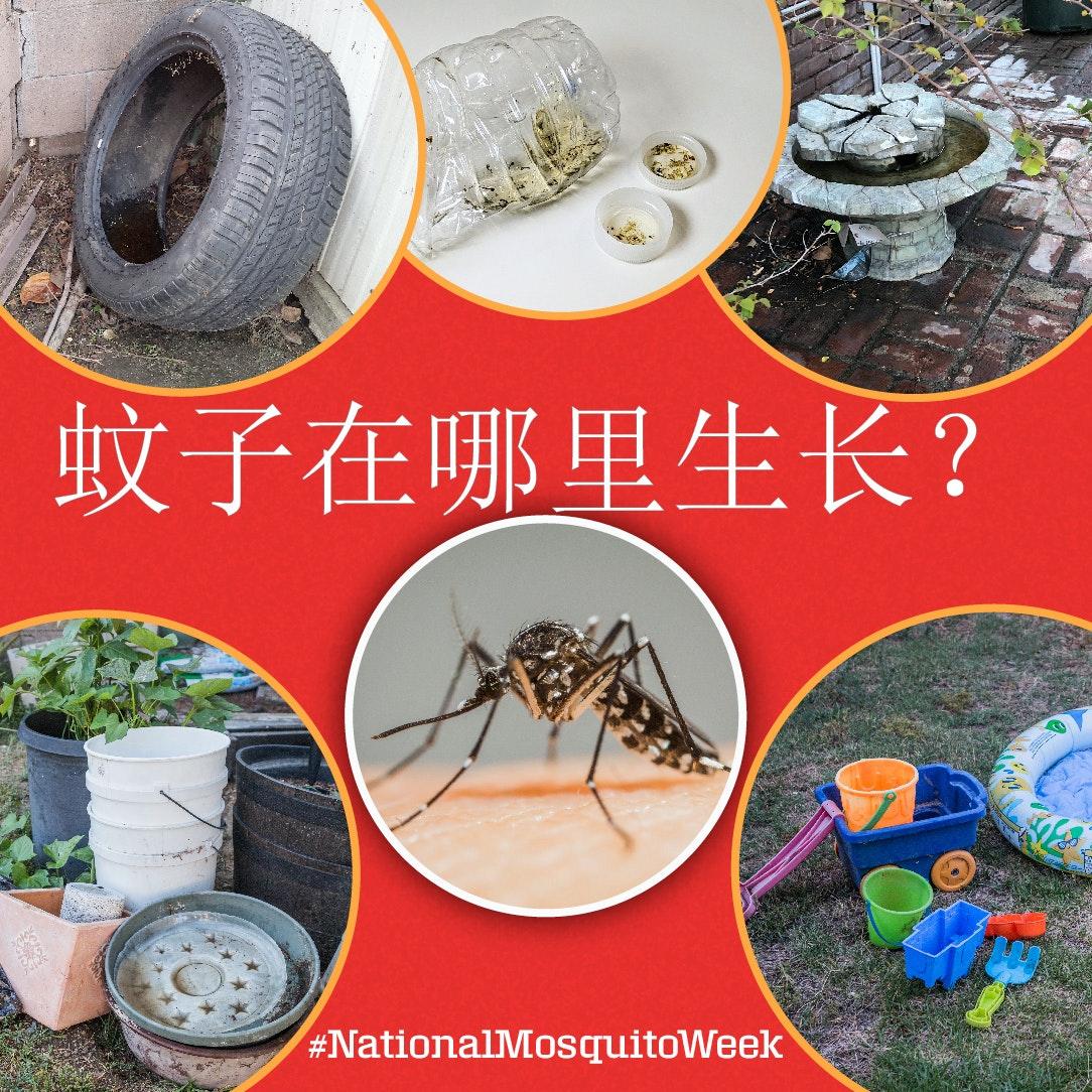 May contain: animal, arachnid, invertebrate, and spider