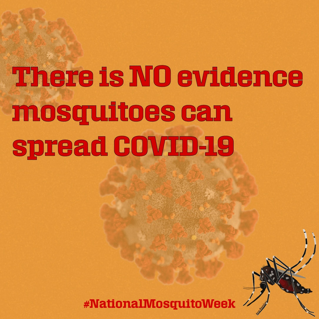 Mosquitoes cannot transmit COVID-19