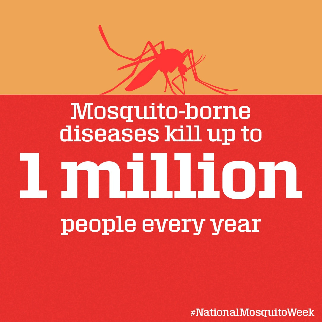 The mosquito is the world's deadliest animal.