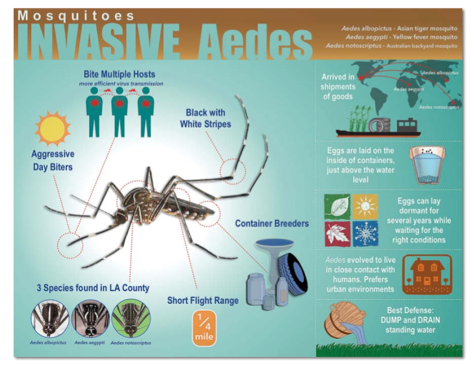 May contain: animal, invertebrate, insect, and mosquito