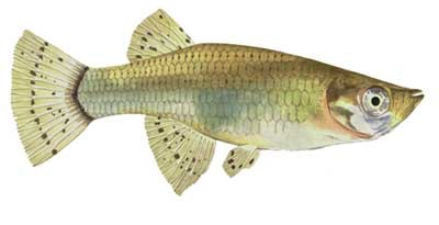 May contain: fish, animal, and carp