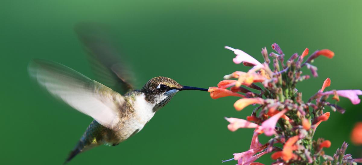 May contain: bird, animal, and hummingbird