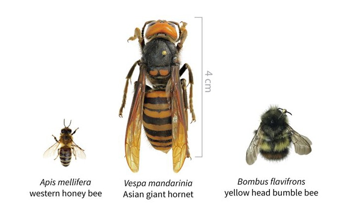 May contain: honey bee, bee, animal, insect, invertebrate, andrena, wasp, hornet, and apidae
