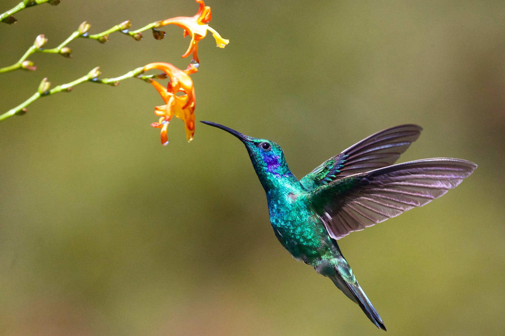 May contain: animal, bird, and hummingbird
