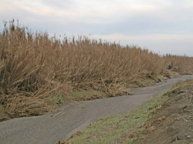 May contain: dry creek bed, invasive weeds, arundo, sand, gravel, plants, dry landscape
