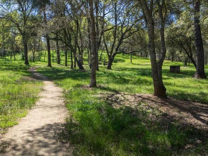 May contain: path, trail, plant, tree, vegetation, ground, nature, outdoors, woodland, land, and forest