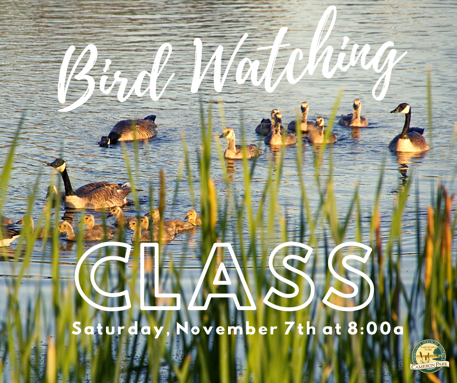 May contain: bird, waterfowl, animal, duck, and mallard